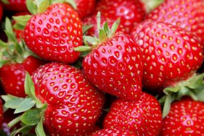 jahody olomouc - Skrbeň